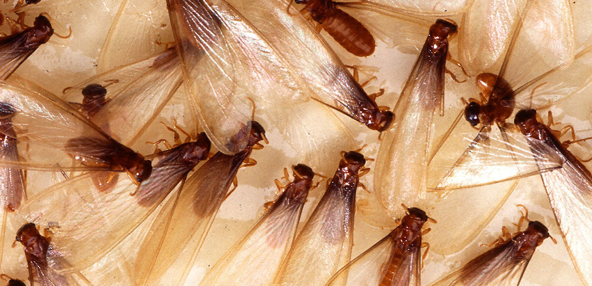 How much does a Termite Treatment cost?