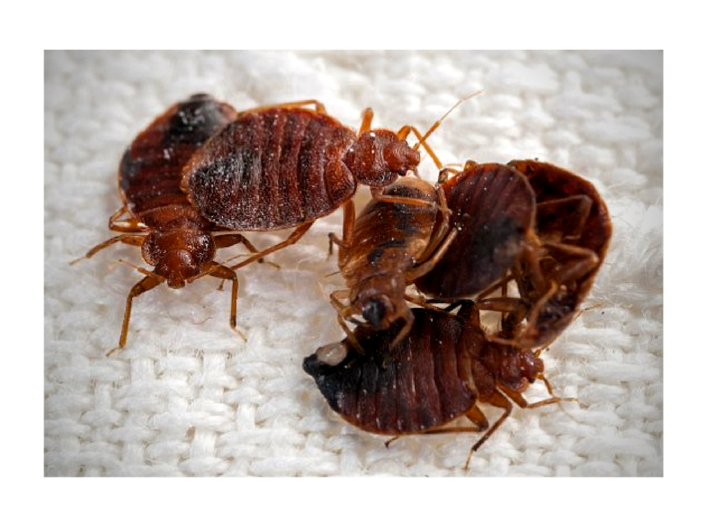 Bed Bug Hot/Cold Treatments